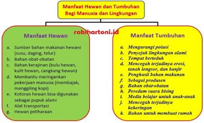 Kunci Jawaban Buku Kelas 4 SD Pembelajaran 1 Tema 6 Subtema 3