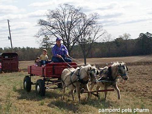 Bit and Bell pull wagon at Buchannon Farm - Swann Station, NC