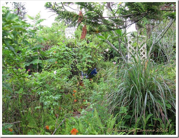 06-09-jungle3