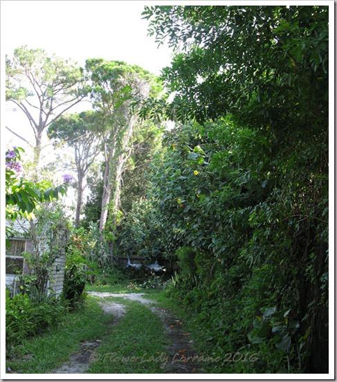 06-14-driveway (1)