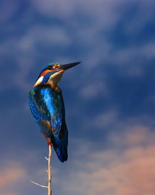 वो पक्षी जो अपने वजन से करीब 24 गुना ज्यादा खाना खाते हैं - anokhagyan.in