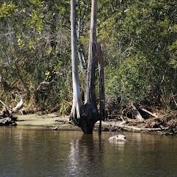 Fowl Marsh from Boat Feb3 2013 143