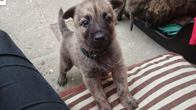 Photo: Pup wil aandacht...  (groen)