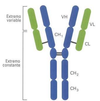 Interpretación de inmunoglobulina