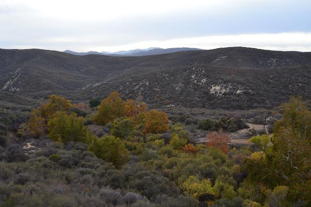 westward view