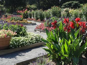 2018.08.21-021 jardin botanique
