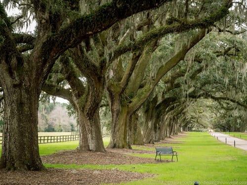 Oak alley Boone Hall plantation Charleston