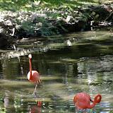 04-07-12 Homosassa Springs State Park - IMGP4545.JPG