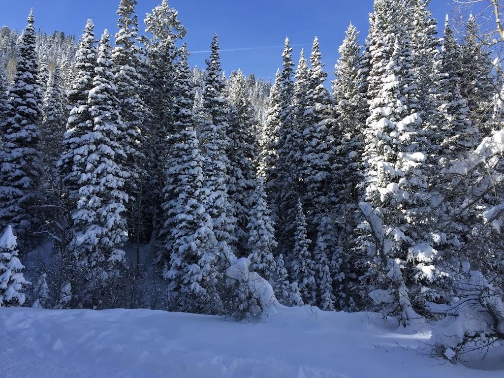 Snowshoeing White Pine - 9