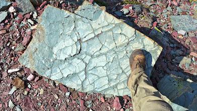 Photo: Mud-cracks in argillite - Belt Formation; over 1 billion yrs. old
