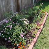 Gardening 2010, Part Two - 101_1868.JPG