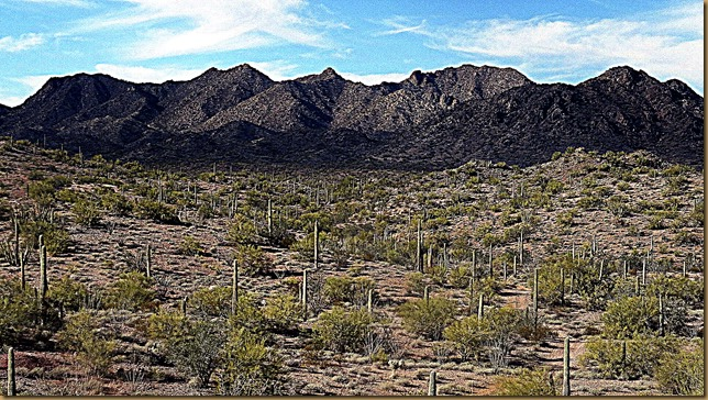 Little Ajo Mountains