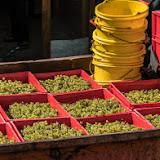 Petites vendanges 2017 du chardonnay gelé. guimbelot.com - 2017-09-30%2Bvendanges%2BGuimbelot%2Bchardonay-122.jpg