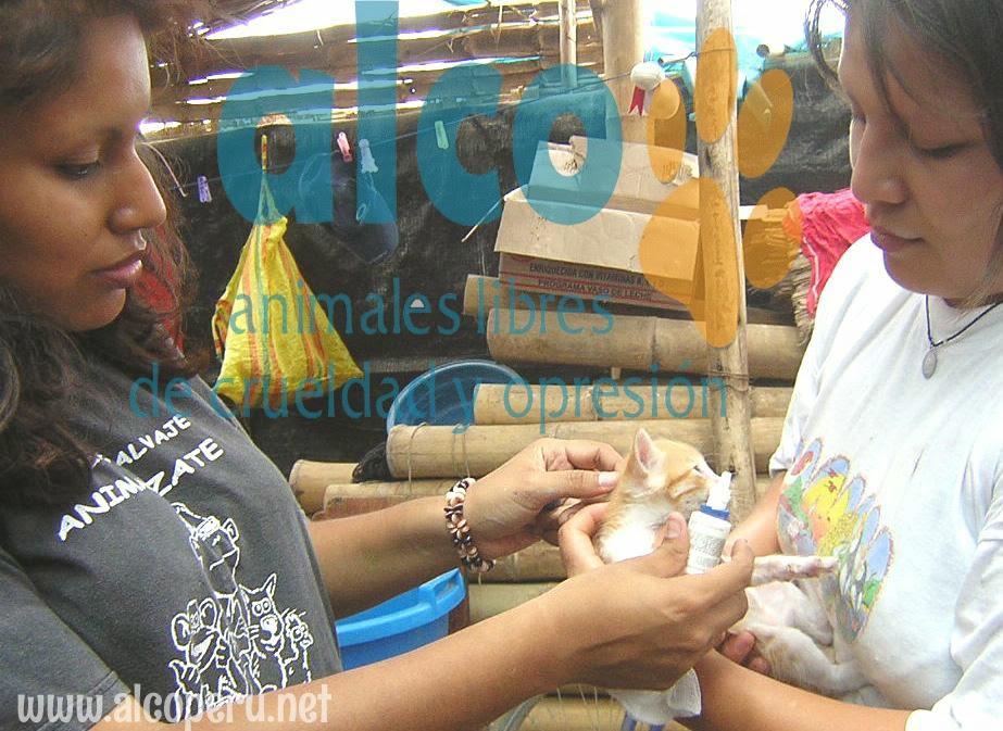 Asistencia Hualcara Cañete terremoto 2007 (19)