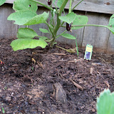 Gardening 2010, Part Two - 101_2938.JPG