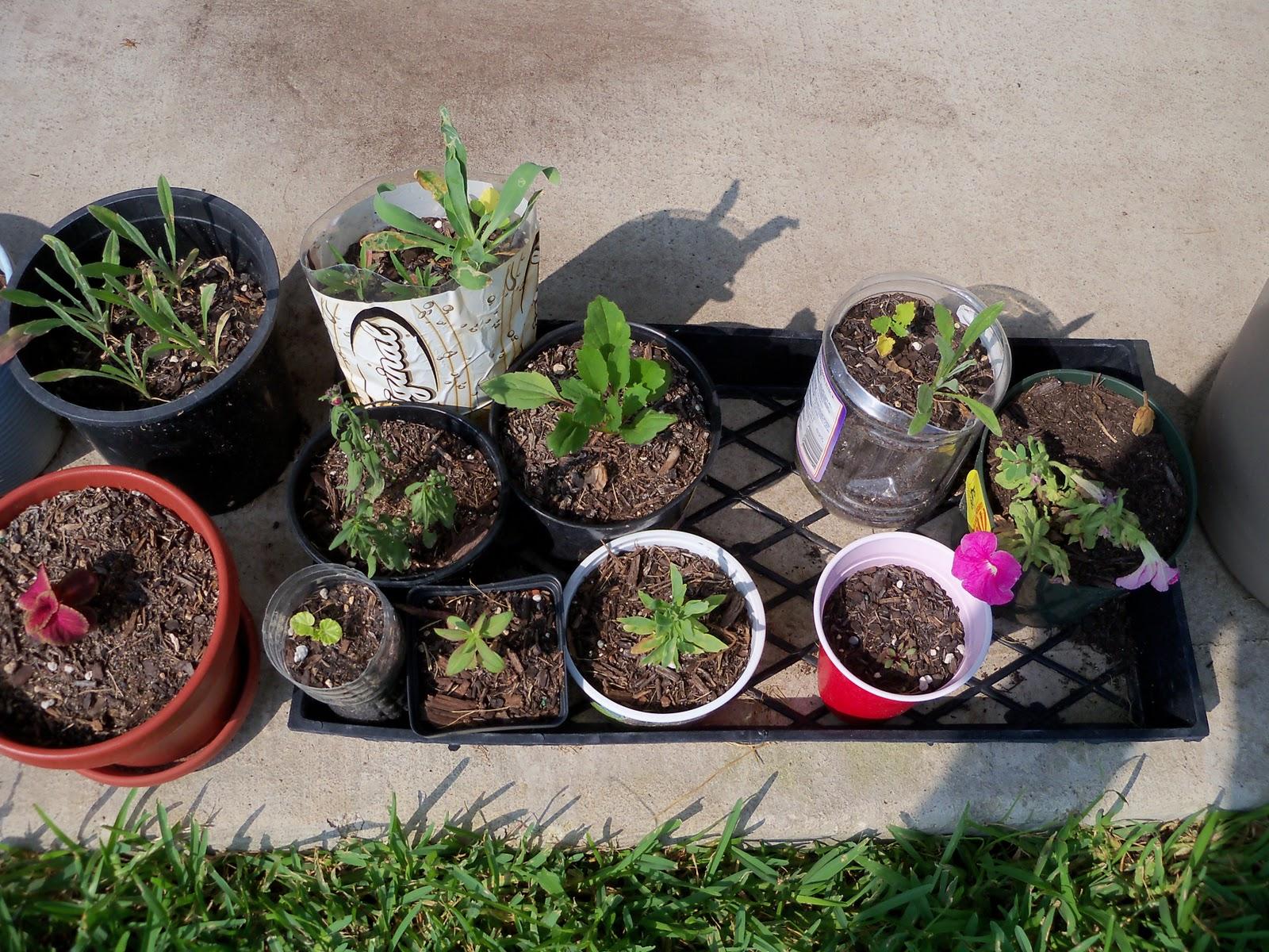 Gardening 2010, Part Two - 101_3131.JPG