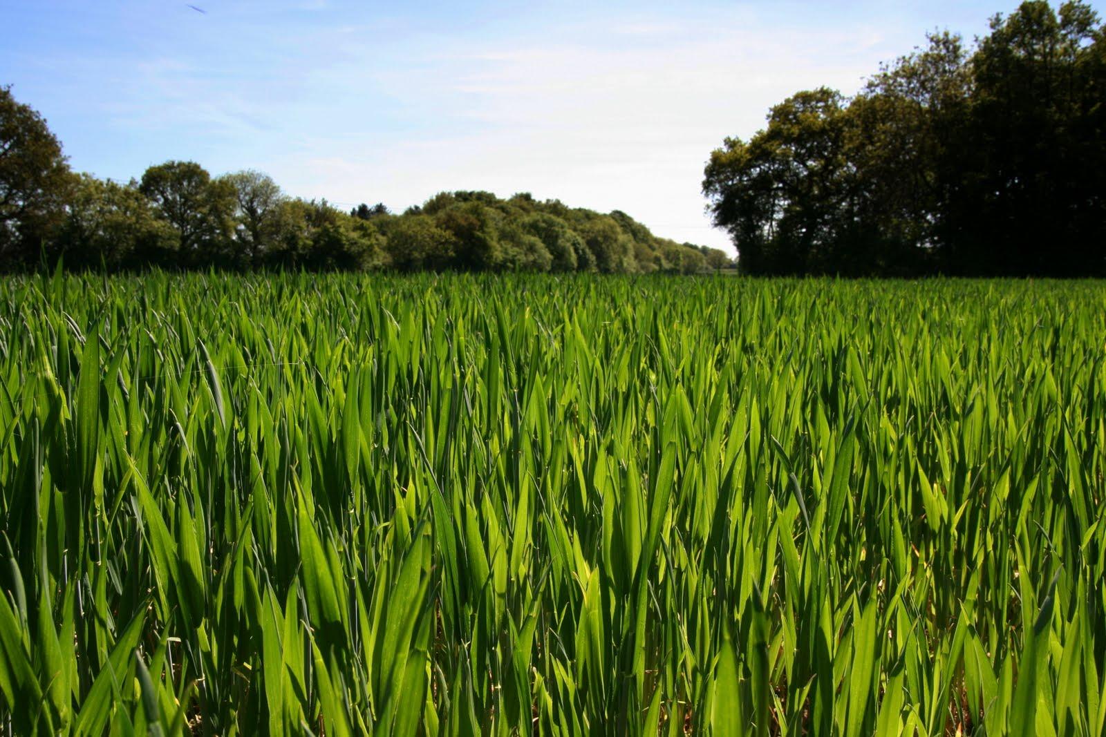1005 040 Chesham to Great Missenden, England Grass