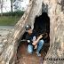 Pohon Mahoni Jalan Palabuhanratu - Surade Mengancam Keselamatan Pengguna Jalan