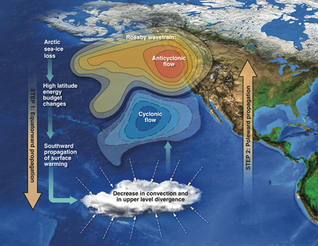 Schematics of the teleconnection through which Arctic sea-ice changes drive precipitation decrease over California. Arctic sea-ice loss induced high-latitude changes first propagate into tropics, triggering tropical circulation and convection responses. Decreased convection and decreased upper level divergence in the tropical Pacific then drive a northward propagating Rossby wavetrain, with anticyclonic flow forming in the North Pacific. This ridge is responsible for steering the wet tropical air masses away from California. Graphic: Kathy Seibert / LLNL