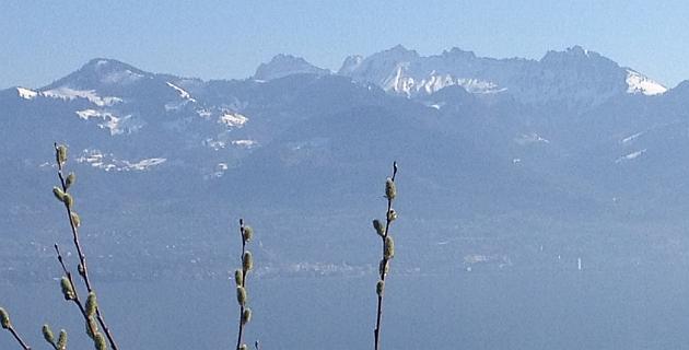 Weidekätzchen schlagen aus vor dem Alpen-Panorama von Montreux