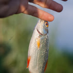 20160526_Fishing_BasivKut_009.jpg