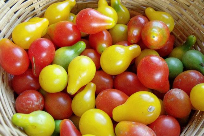 Cà chua bi hình trái lê gây sốt tại Việt Nam - 55c961ac6efdb