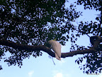 Kakadu...die gibts hier auch recht häufig!