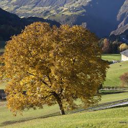 Karersee Singletrailtour 27.10.16-8183.jpg