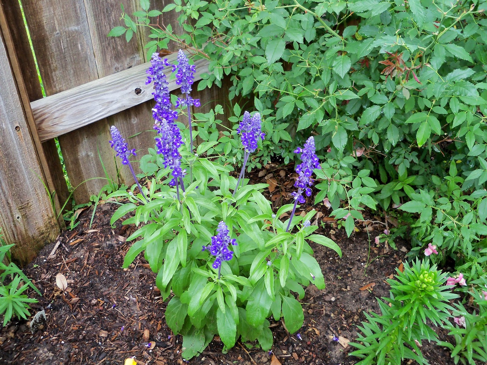 Gardening 2014 - 116_2592.JPG