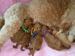 Photo: Unsere fünf Buben! Alle gesund und munter!