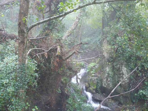 Petite montée dans la forêt humide...