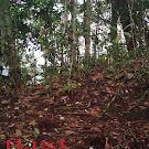 Cari Sinyal Dibukit, Abu Tewas Diterkam Harimau