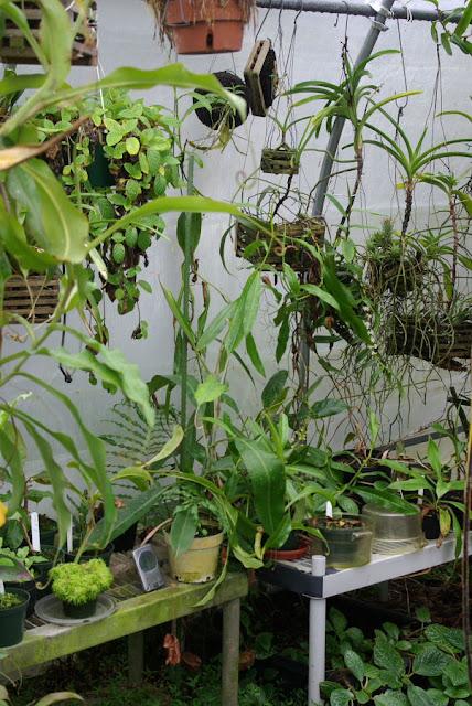 Greenhouse of Michael Manna