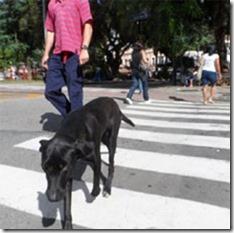 cachorro-na-faixa-exemplo
