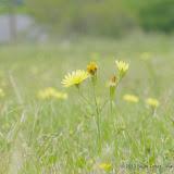 2013 Spring Flora & Fauna - IMGP6379.JPG