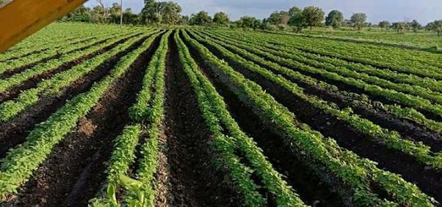 दिशादर्शक तंत्र: साखरा येथील शेतकऱ्याकडून सोयाबीन व तूरसाठी बेडचा वापर Farmer Adopts 'Bed System' For Soyabean And Tur Crops