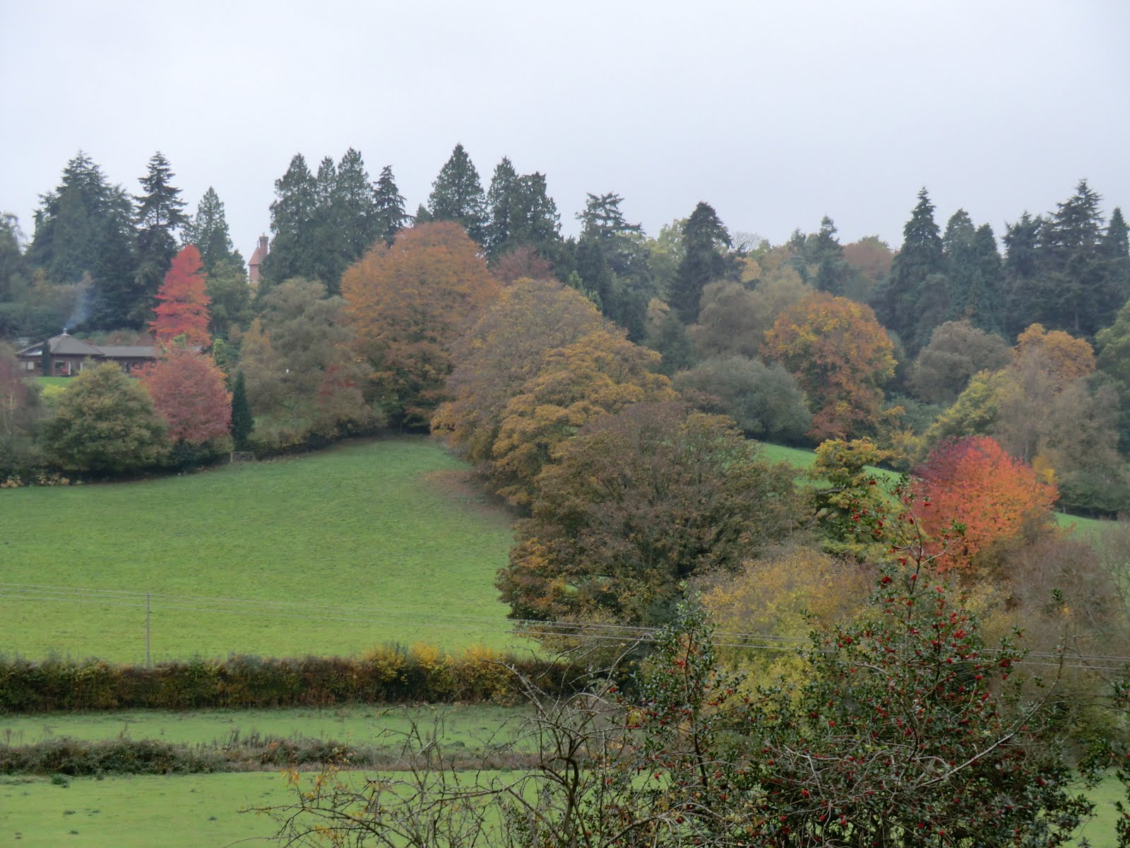 CIMG0208 Autumn colours near Harrison's Rocks