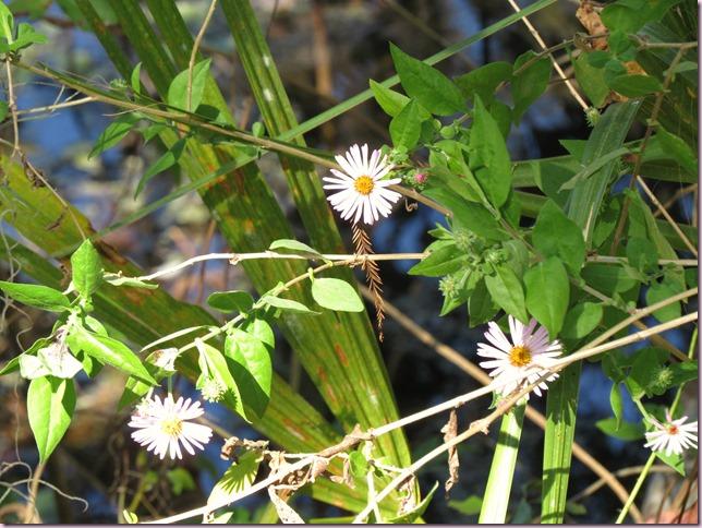 flowersIMG_5023
