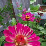 Gardening 2011 - 100_8211.JPG