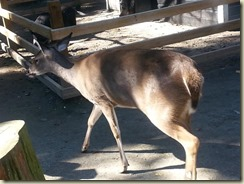 20151030_Deer Magnolia Zoo (Small)