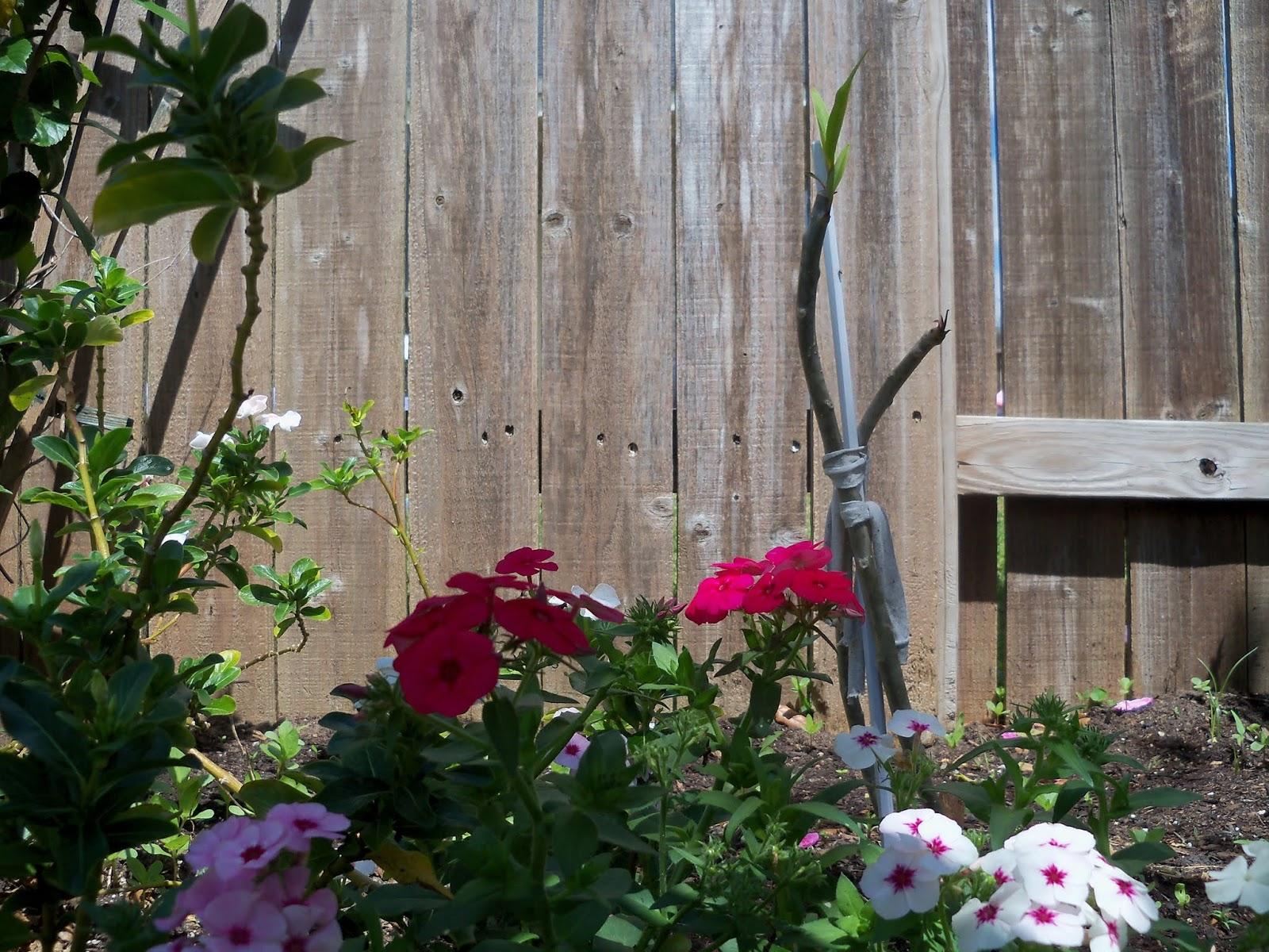 Gardening 2013 - 115_5685.JPG