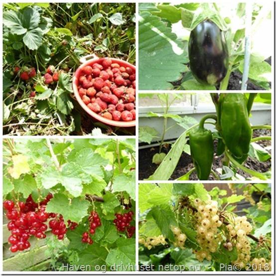 Høstklart fra drivhus og have