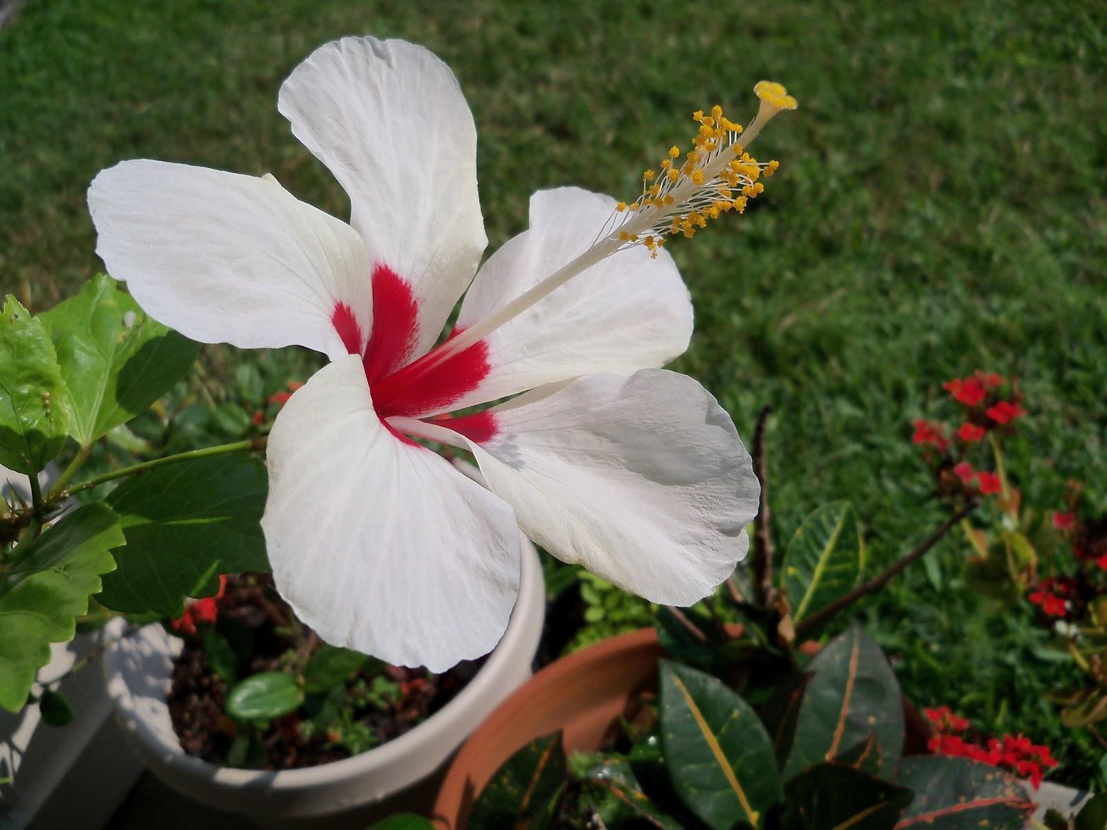Gardening 2012 - 115_1909.JPG