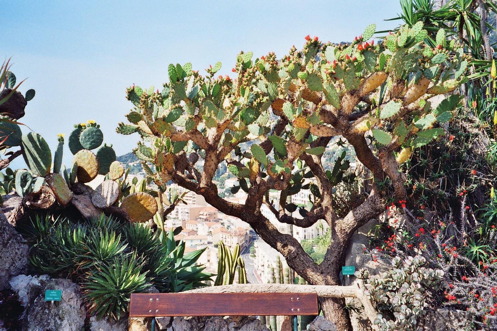 Exotic garden of monaco for Jardin exotique