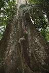 Joshua Tarzan at Cocha Otorongo in Reserve Zone (Manu National Park, Peru)