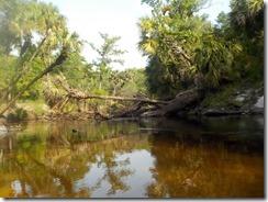 River view-2