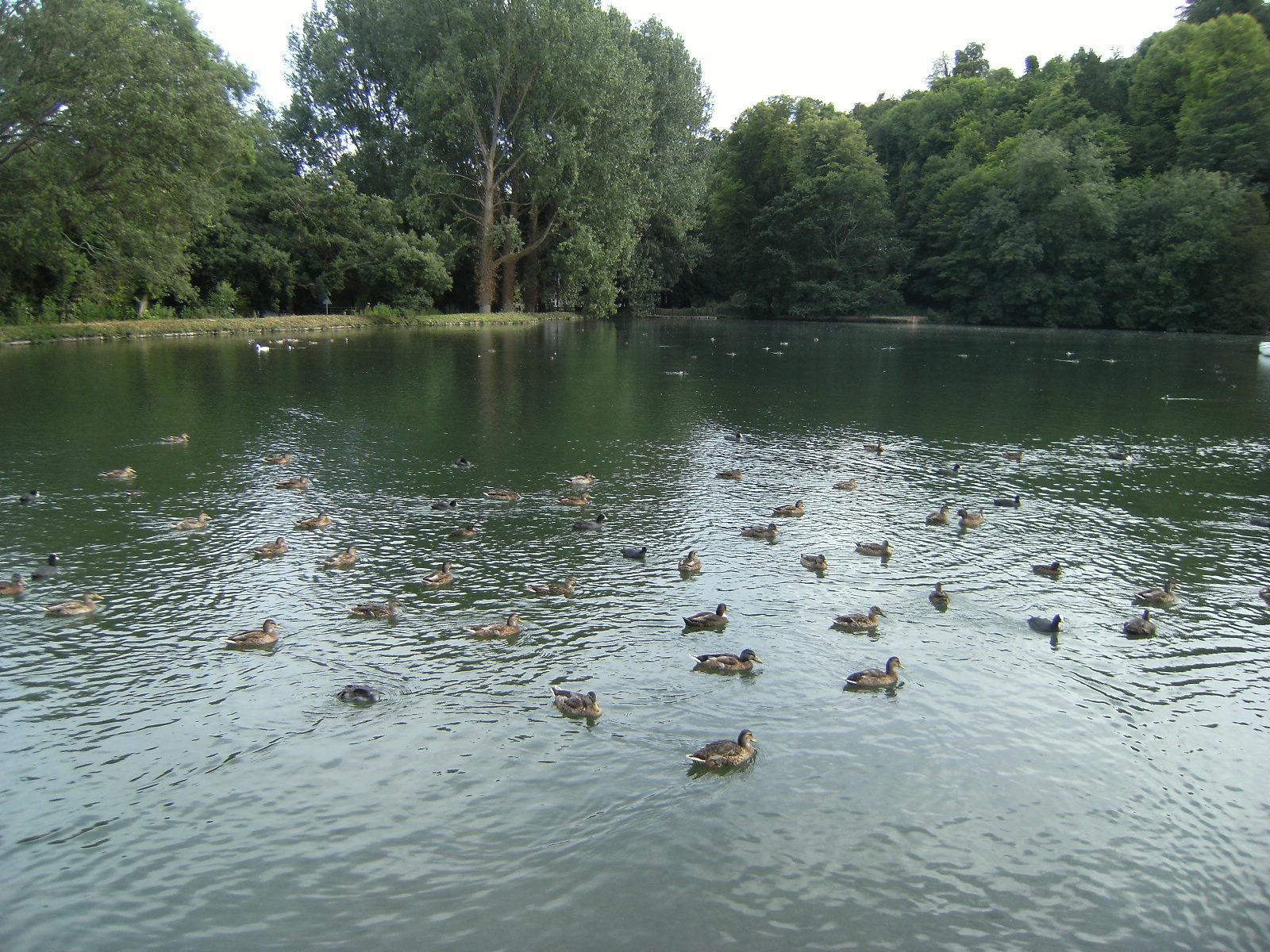 1007190201 Swanbourne Lake