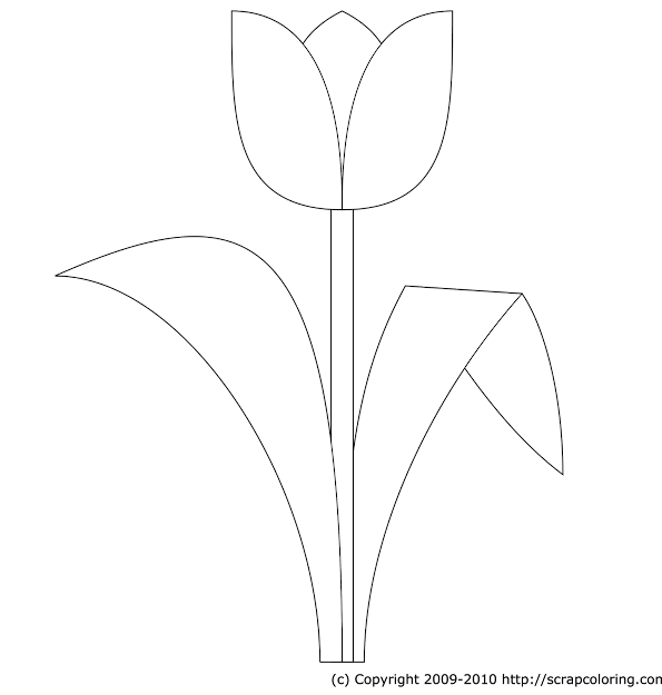 Tulip Coloring Page Tulip