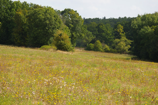 Prairie fleurie : piérides, colias, lycènes. Les Hautes-Lisières, 12 septembre 2009. Photo : J.-M. Gayman