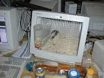 normal_hamster.jpg